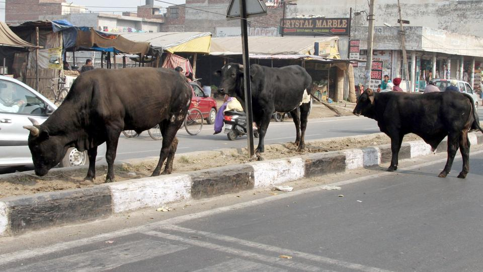According to data provided by Northern Railway, the number of stray cattle hit by trains increased by 66% in 2018-19.