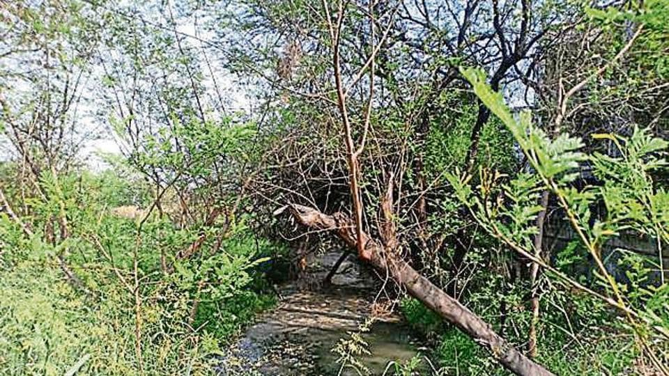Work will begin to redevelop 115 hectares of sewage sludge ponds into the city's seventh natural reserve.