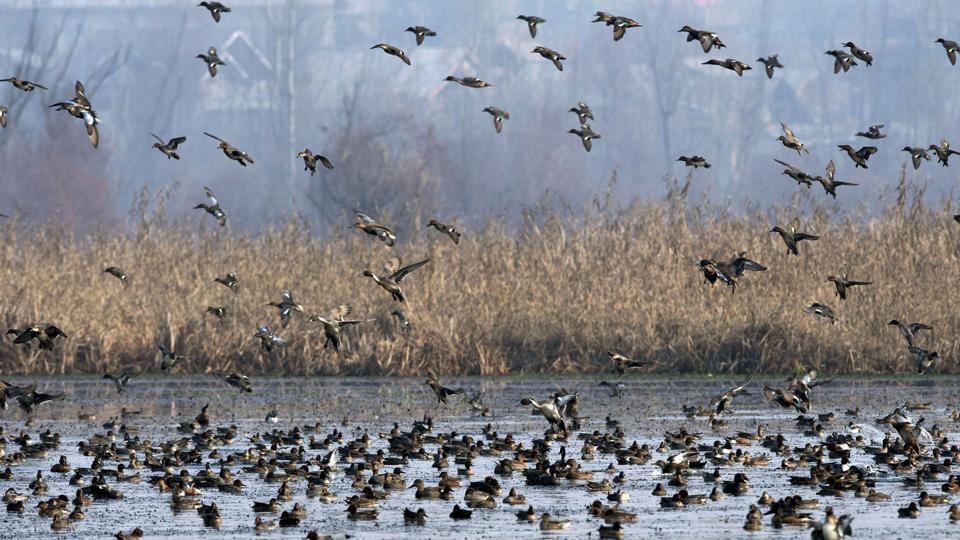 coastal wetlands,protectors,SAC
