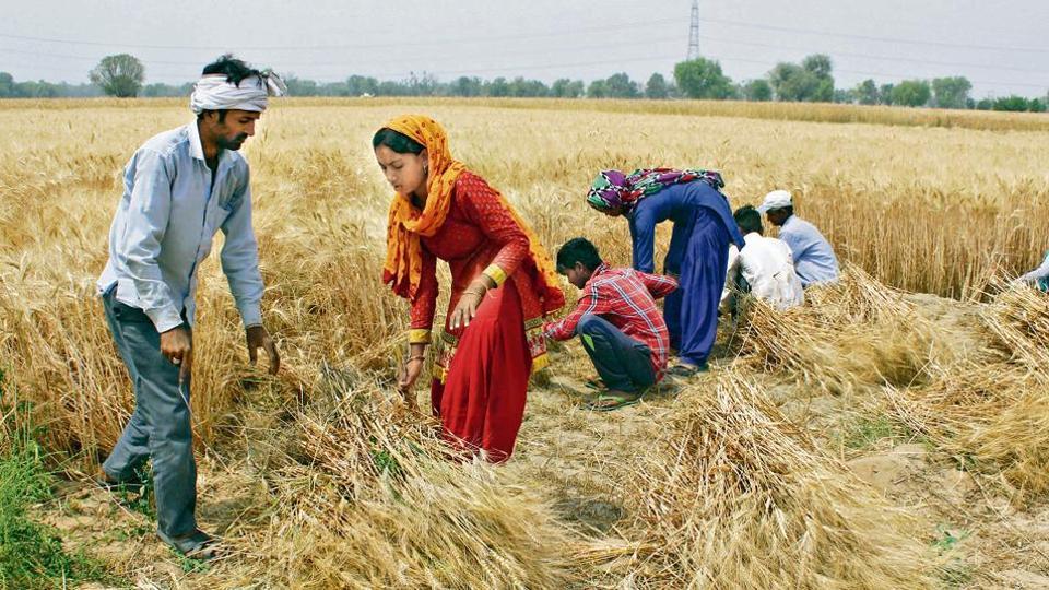 jobs,growth,haryana