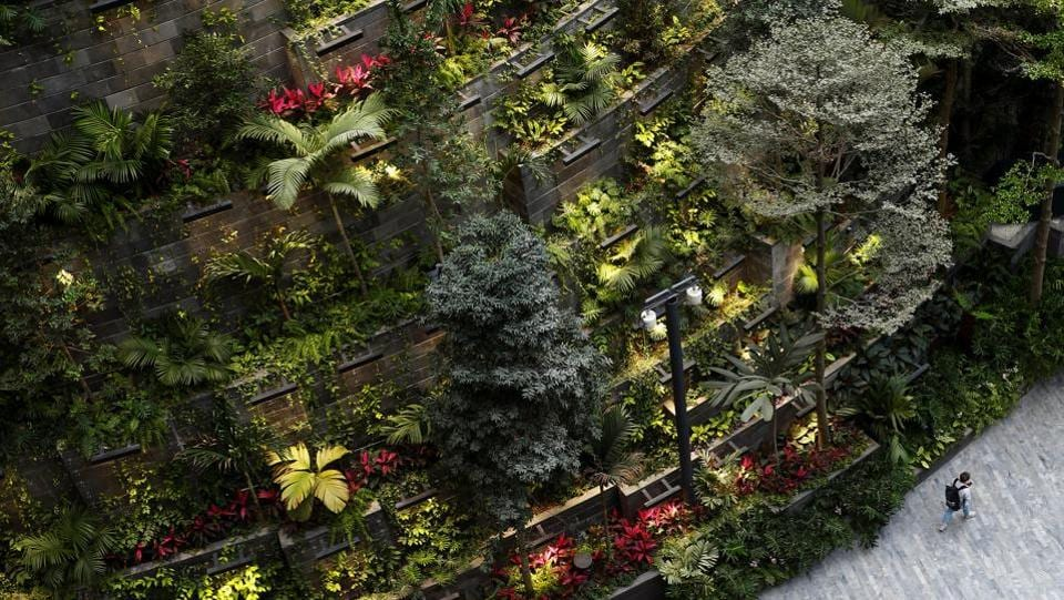 A man walks past a section of the 4-storey plant display. Within the indoor garden Forest Valley, there are over 120 species of plants including ferns and orchids. There are curated plants and two olive trees from Spain, each more than 100 years old. Canopy Park which is at the top level of the garden features more gardens and leisure facilities. (Feline Lim / REUTERS)