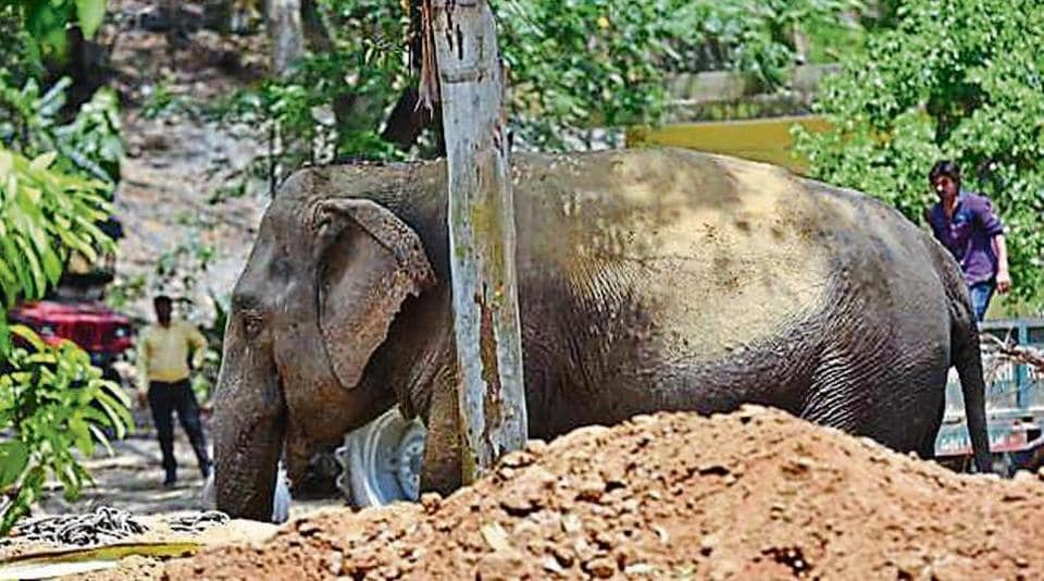 The elephant, seized from its owner in Wazirabad, refused to board a truck for nearly 24 hours.