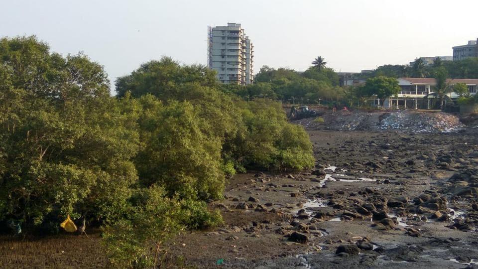 'Mangroves,Colaba's Navy Nagar',Colaba's