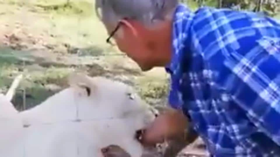 The lioness grabbed his hand and refused to let go for a few seconds.