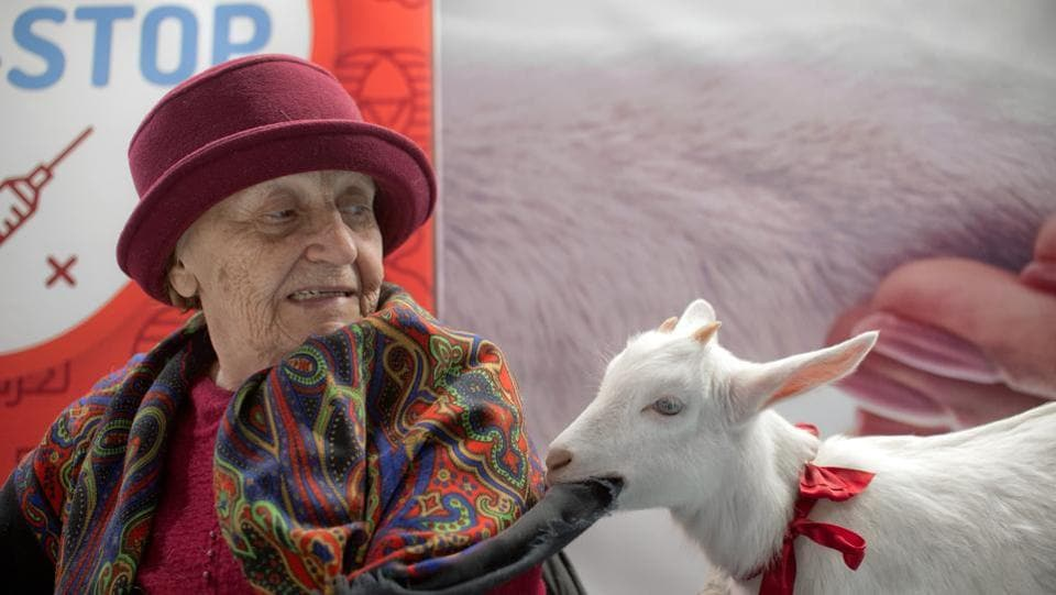 An elderly lady reacts as a baby goat she displays chews on her scarf at the Pet Expo 2019, a pet show in Bucharest, Romania. (Andreea Alexandru / AP)
