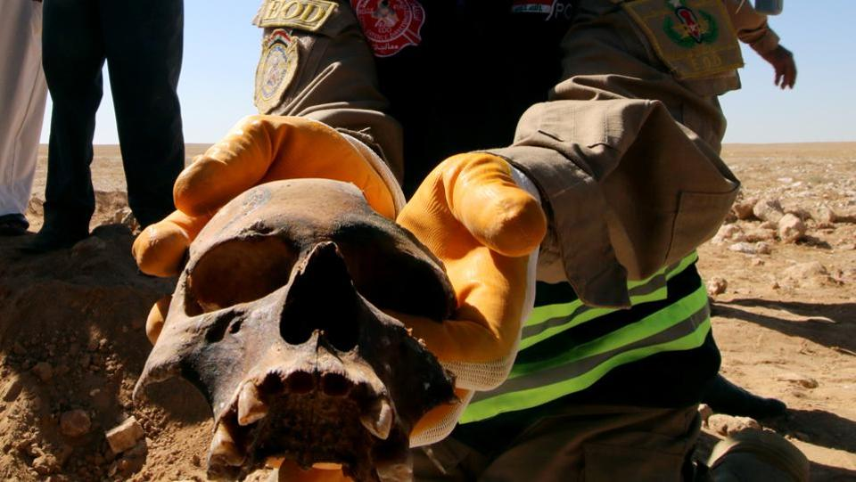 An Iraqi member of the Civil Defense shows a human skull from an unearthed mass grave of Kurds in west of the city of Samawa, Iraq. (Essam al-Sudani / REUTERS)