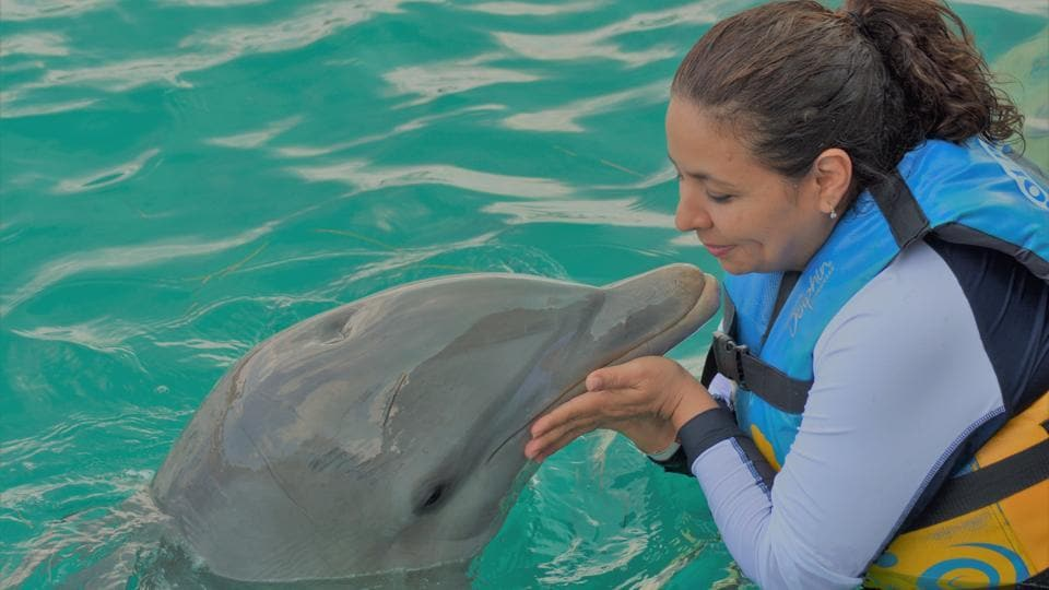 Study finds new level of complexity in dolphin communication