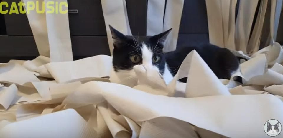 Viral video,YouTube,Cat
