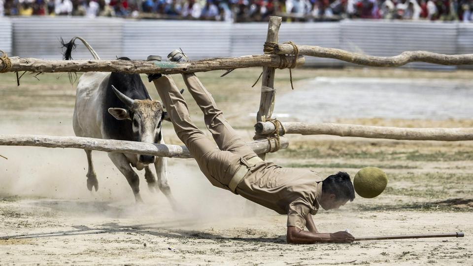 A policeman falls through barricades while being chased by a bull, which had entered the helipad prepared near the venue of an election campaign rally in support of Samajwadi Party candidate Dimple Yadav, aheah of Lok Sabha polls in Kannauj, Uttar Pradesh. (PTI)