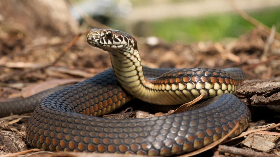 Venom,Snake venom,Racket busted