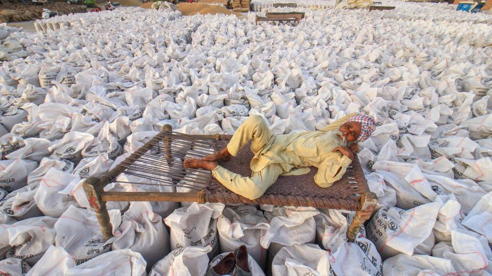 Sudden arrival of harvested wheat crop in large quantities to the mandis of Punjab is cause for worry to the state government and its food and civil supplies department, as it has led to a glut. Recent daily arrivals have touched 10-12 lakh tonnes while not be more than 5 lakh tonnes could be lifted. A dip in temperature in March and sporadic rainfall in the state delayed the crop harvest. (PTI File)