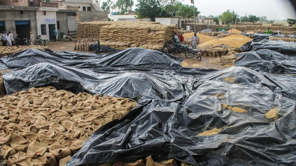 Wheat sacks are covered with tarpaulins during rains at a grain market near Patiala, Wednesday, April 24, 2019.