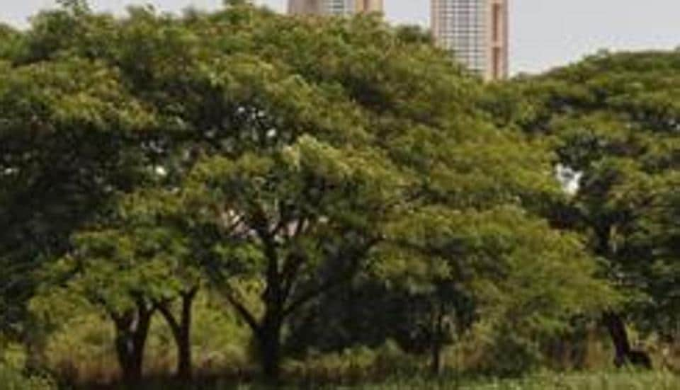 North MCD ordered to donate 20 footballs, plant 100 trees