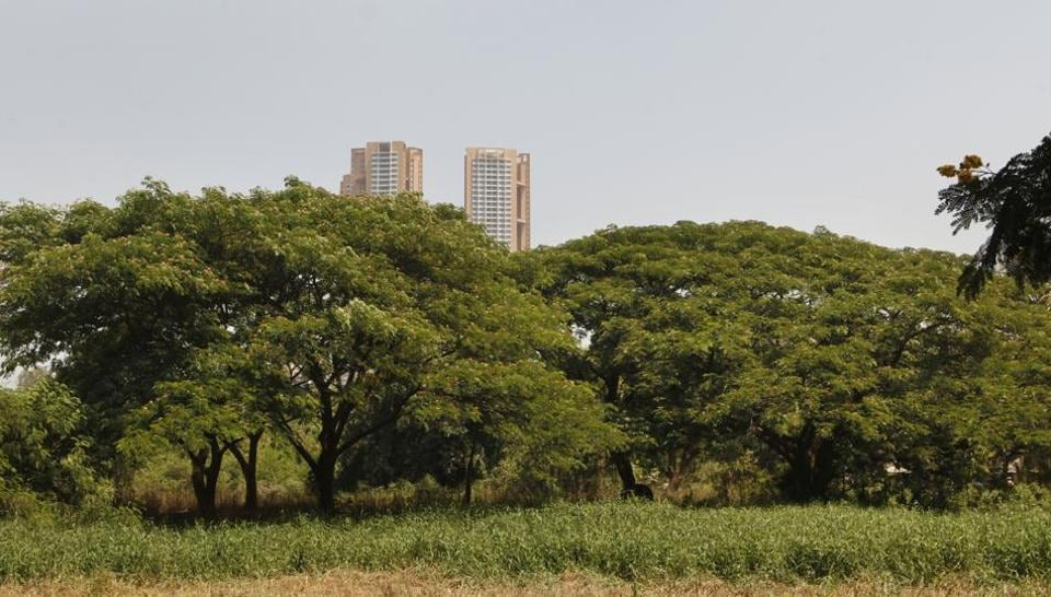 """MSRDC's chief engineer Shankar Dhote said, """"In the original project report, no forest land was involved. Tree-cutting is not taking place on forest land, which is why it is not reflected in the original report."""""""
