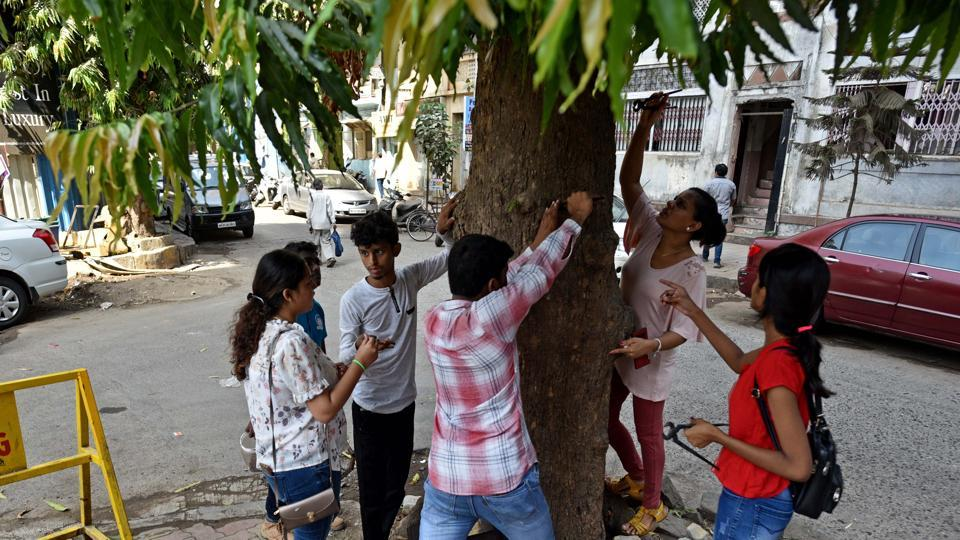 In Mumbai, 5.7K nails removed from 2,000 trees in one year
