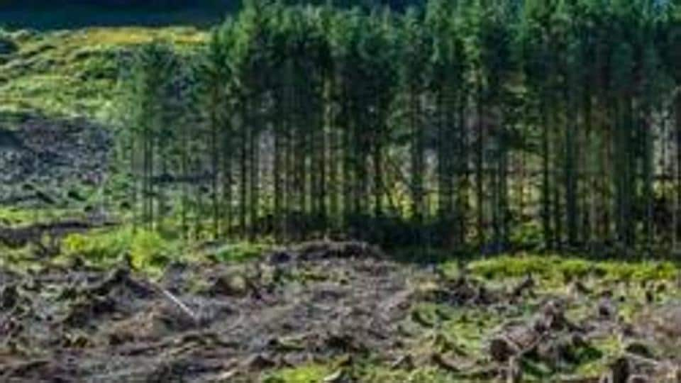 IPBES Global Assessment Report on Biodiversity and Ecosystem Services,india's forests,soil erosion