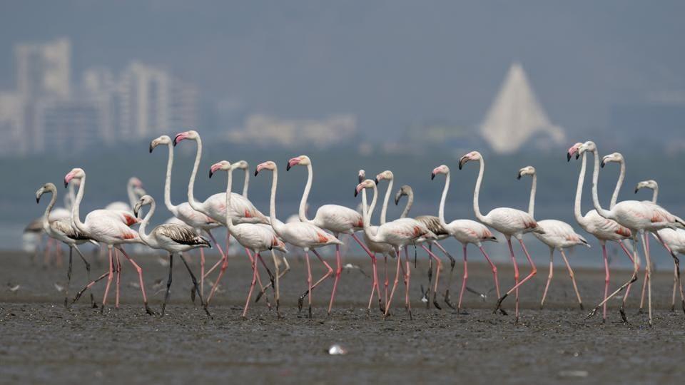 Flamingo,Badri Chatterjee,Mumbai