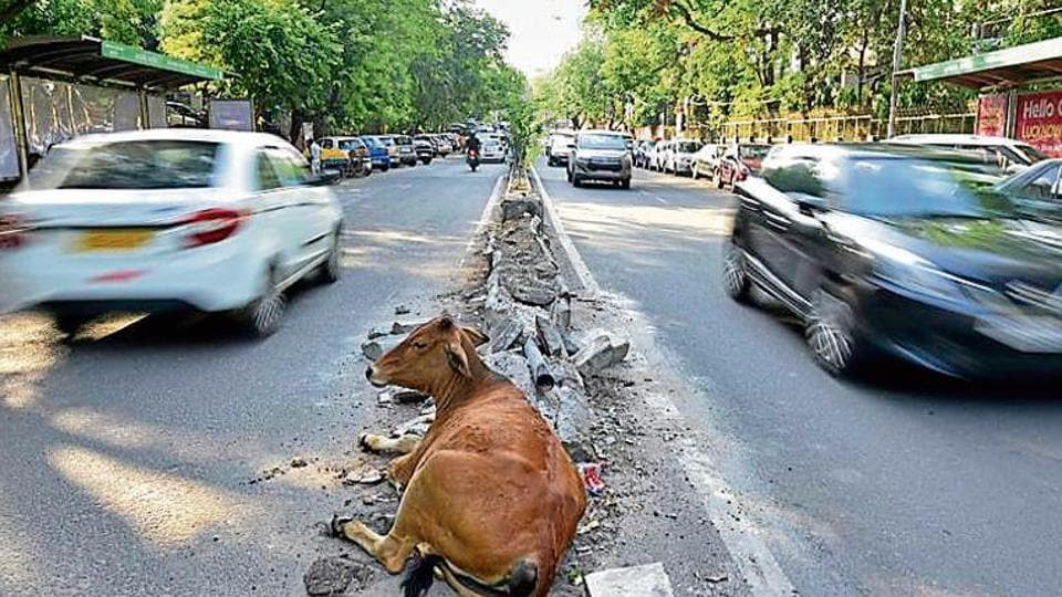 NGT approval sought to repair GK-II median | delhi news | Hindustan
