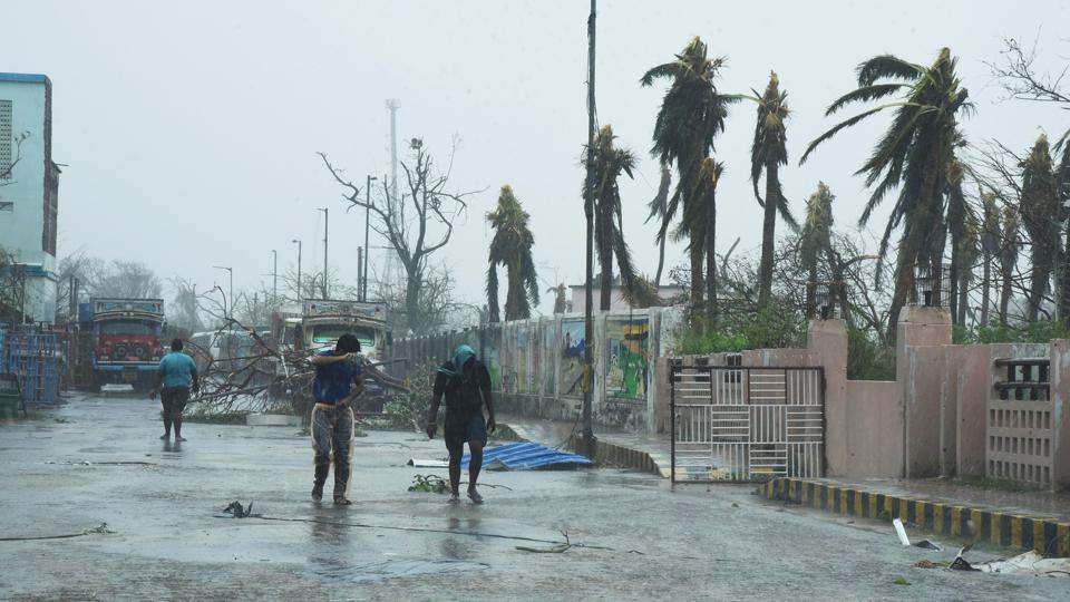 Hit by Fani, coconut farmers stare at an uncertain future