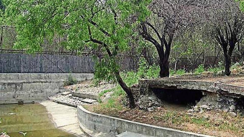 endangered species,animals,delhi zoo