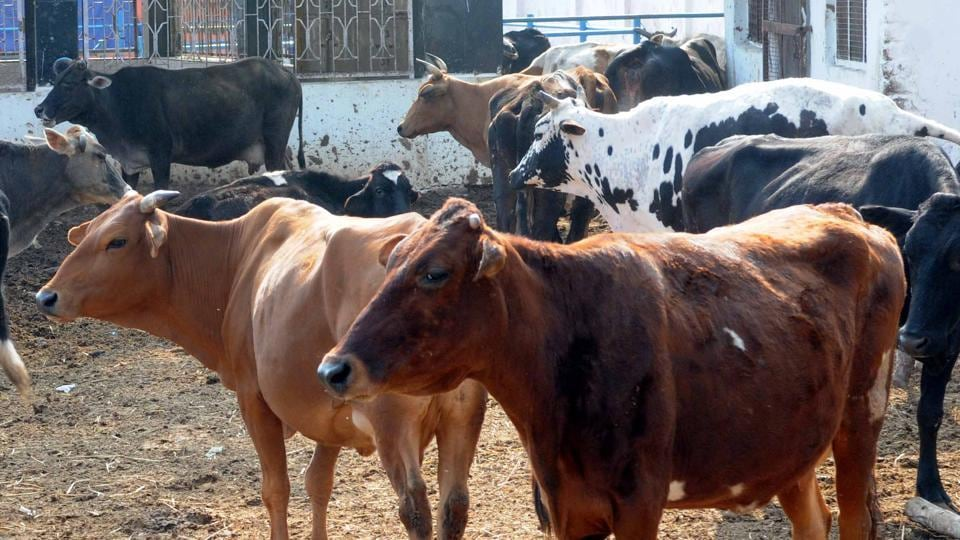 27-yr-old man held for unnatural sex at cow shelter | india