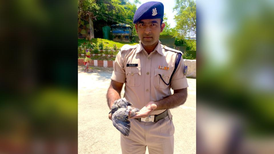 The pigeon was stuck and the jawan rescued the bird.