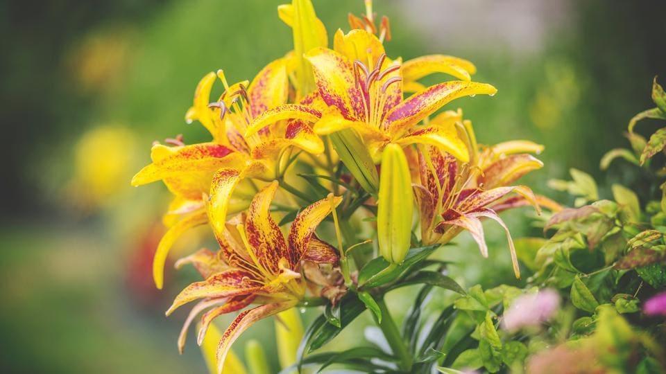 Flower pesticides,pesticides,high BP
