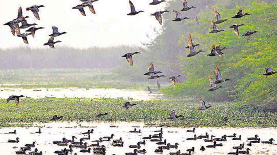 bird species,birds,bird count
