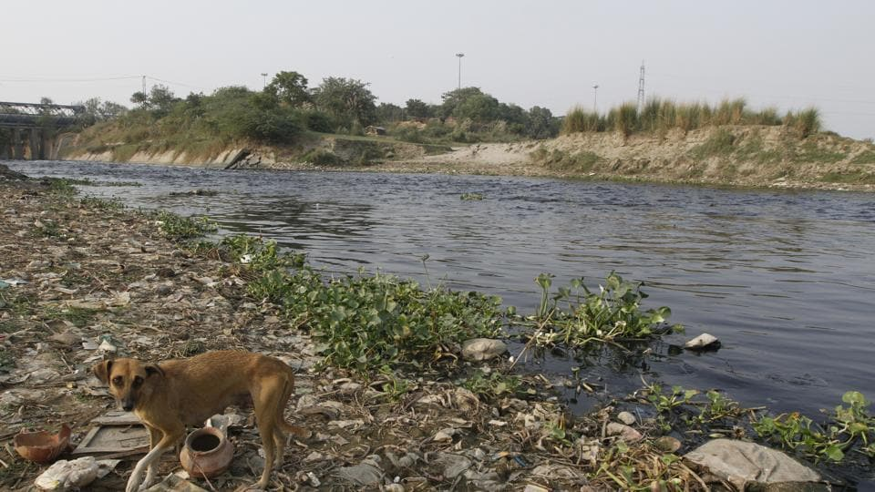 A team of the NGT-appointed Yamuna pollution monitoring committee in the national capital has found large quantities of solid waste and polythene dumped in storm water drains across the city that empty into the river, polluting it.