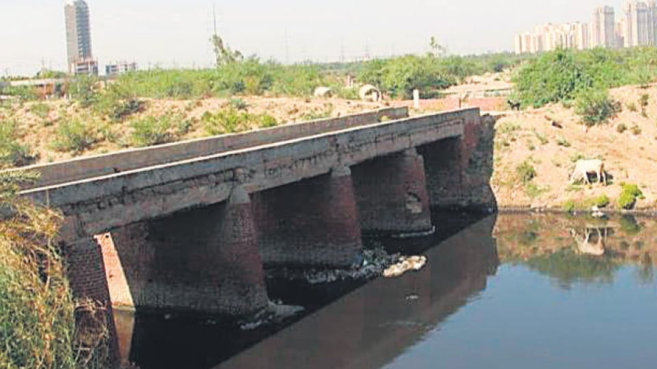 An existing unused walking bridge over a culvert will be developed as animal bridge by Noida Authority.