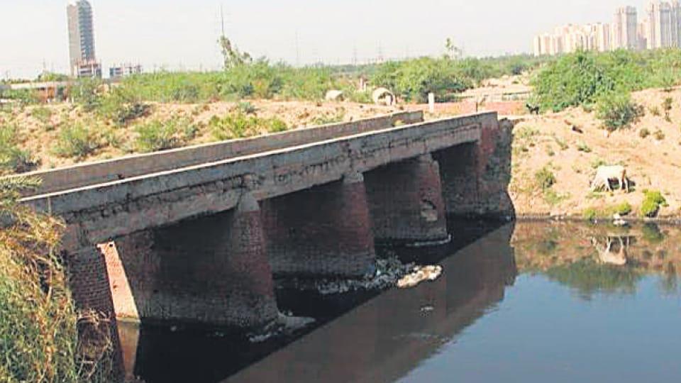 noida authority,animal bridge in noida sec 91,noida news