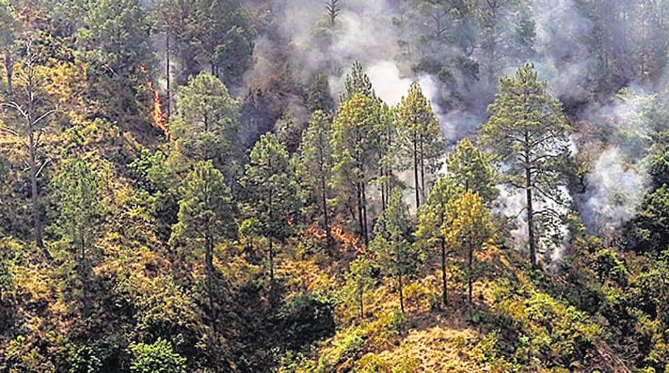 Uttarakhand has already lost over 1798 hectares of forest including 1341 hectares of reserve forest.