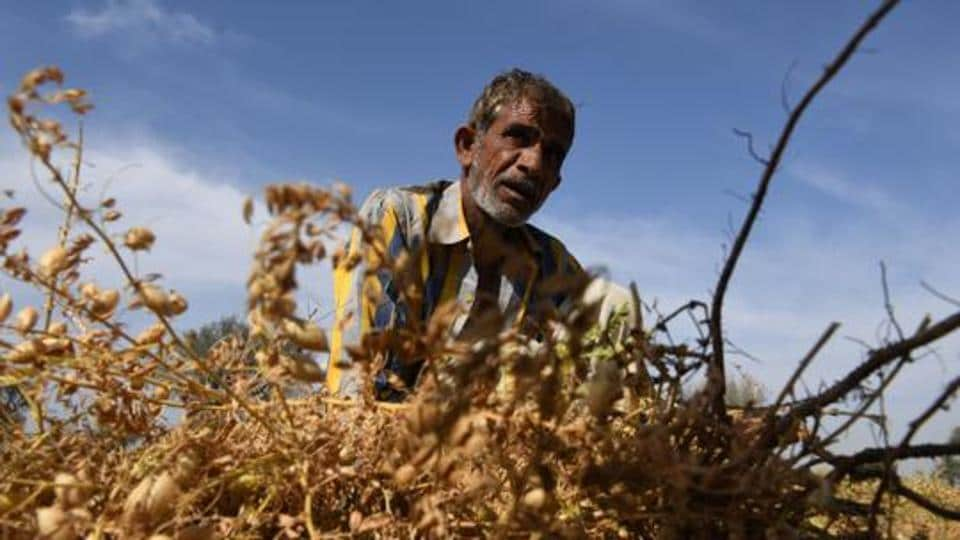 An official said that locusts in millions have attacked vegetation fields in Jaisalmer.