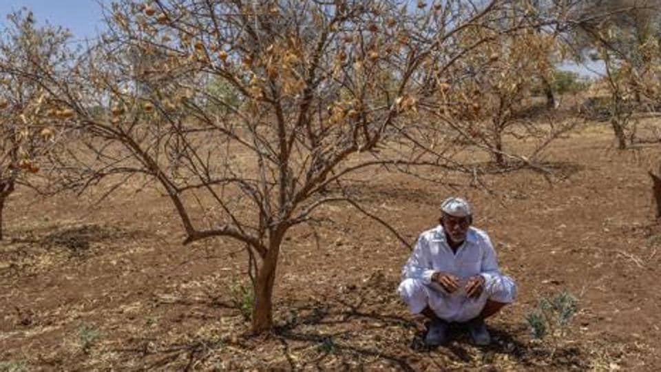 A farmer sitting beside dead Lime trees due to drought at Navegaon Village, Paithan in Marathwada, India, on Monday, April 25, 2016.