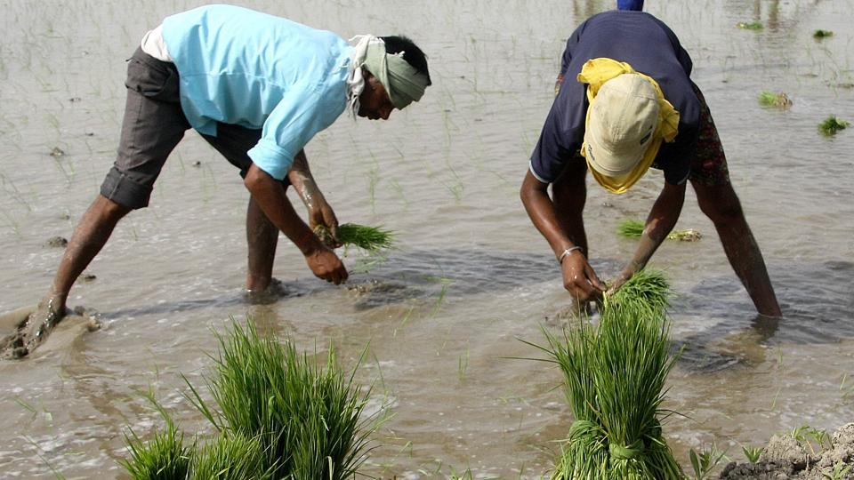 Paddy production,record low