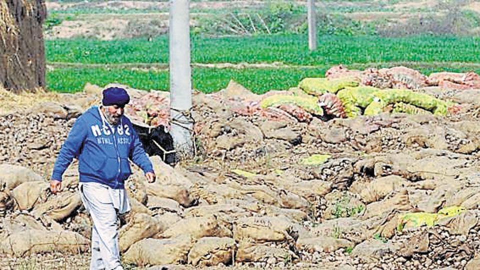 NABARD,punjab gramin bank,punjab potato farmers