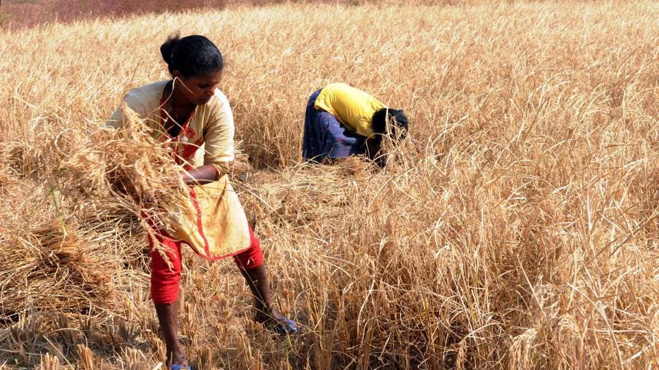 The long delay in distribution of drought relief— some six months have passed since the drought assessment visit by a central team — have made the farmers despondent.
