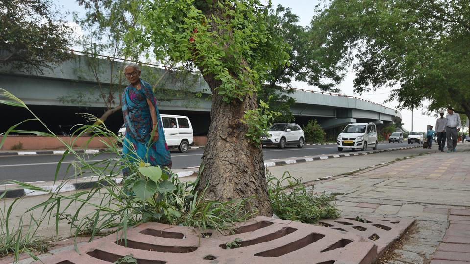 saplings,cutting tree,deforestation