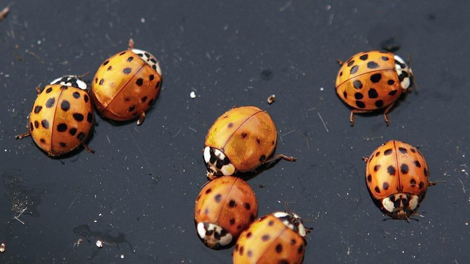 Ladybug,California