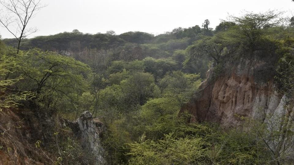 Aravalli in Gurgaon,aravalli biodiversity park,aravallis