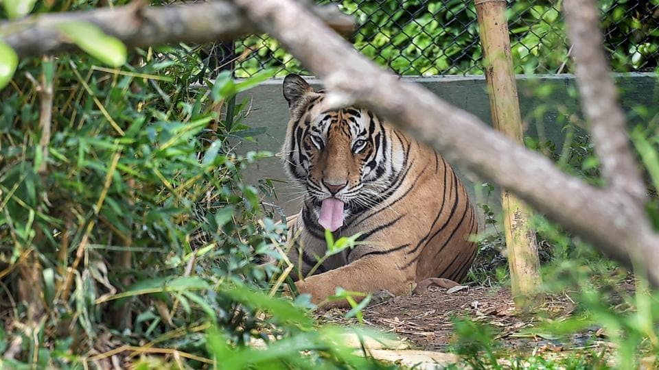 Tigers living outside reserves need attention. We need better surveillance measures,  more information gathering and better coordination among states to protect our tiger population. Can we imagine India without tigers?