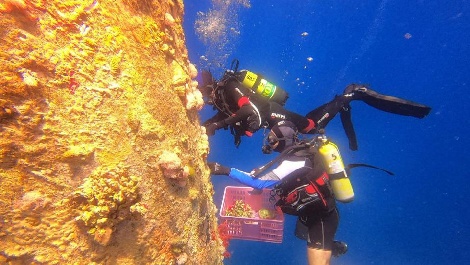 "While relocation saves the coral from a certain death, not all survive the move, which could be to the observatory and local educational facilities, or even the Jerusalem zoo's aquarium. ""Corals in general are very important animals in being species that engineer the environment,"" Israeli marine ecologist Assaf Zvuloni said. ""It's much more than just the coral itself."" (Menahem Kahana / AFP)"