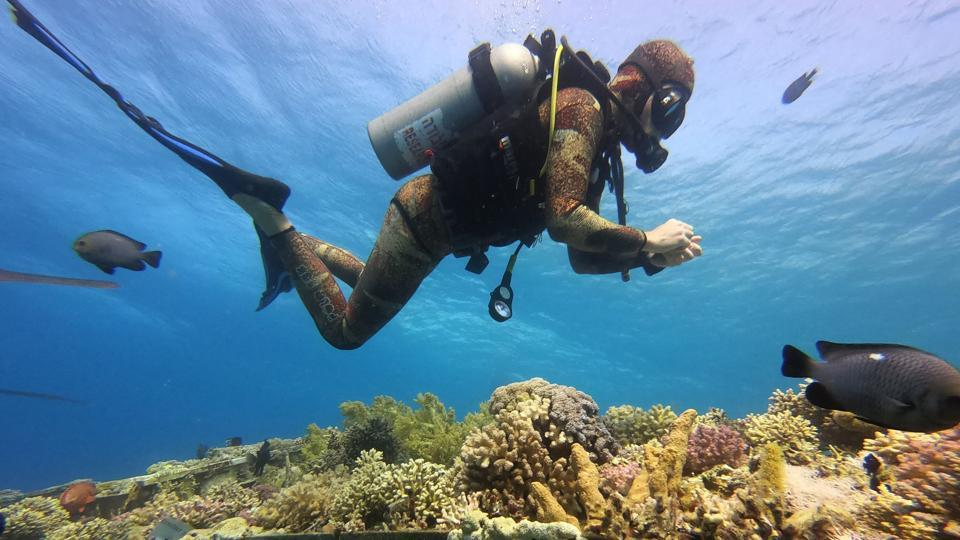 "A marine biology university employee inspects corals growing on tables in the Red Sea as a part of a research in the Interuniversity Institute for Marine Sciences near the southern Israeli city Eilat. The proximity of the Gulf of Eilat's reefs to the shore increases the threats they face, with ""toxins and pollution"" from human activity and industry entering the bay on a daily basis, according to French marine biologist Guilhem Banc-Prandi. (Menahem Kahana / AFP)"