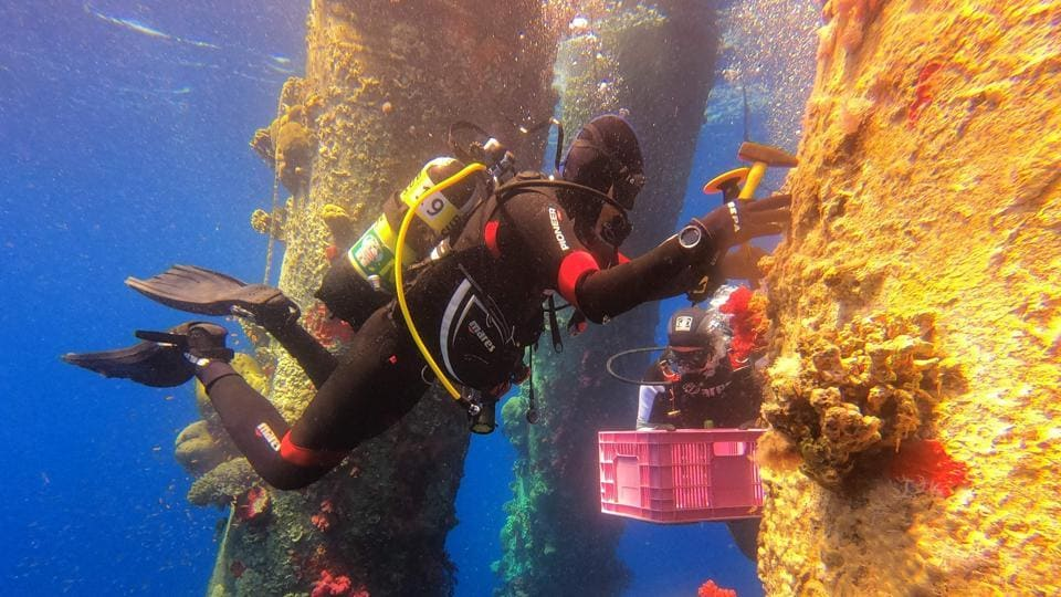 "An Israeli Nature and Parks Authority employee dives in the Red Sea to remove corals that grew on columns supporting the Europe Asia Pipeline crude oil jetty off the shore of ahead of maintenance works at the site. With a chisel placed at the bottom of the red coral, he carefully begins to hit, causing a loud clacking to reverberate through the silent sea. ""We need to safeguard them,"" he said after the dive. (Menahem Kahana / AFP)"
