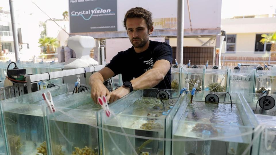 Guilhem Banc-Prandi, currently working on a doctorate at the Interuniversity Institute for Marine Sciences, inspects corals in an aquarium in the southern Israeli resort city of Eilat. Coral populations around the world are undergoing bleaching and dying due to global warming, but the population in the northern Red Sea has remained stable due to its unique heat resistance. (Menahem Kahana / AFP)