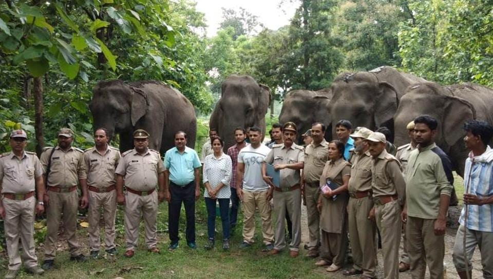 RK Tiwari, sub-divisional forest officer (SDO) Kalagarh said the instructions had been issued by principal chief conservator of forests (PCCF) Jai Raj, who visited the elephant shelter in Kalagarh on Thursday.