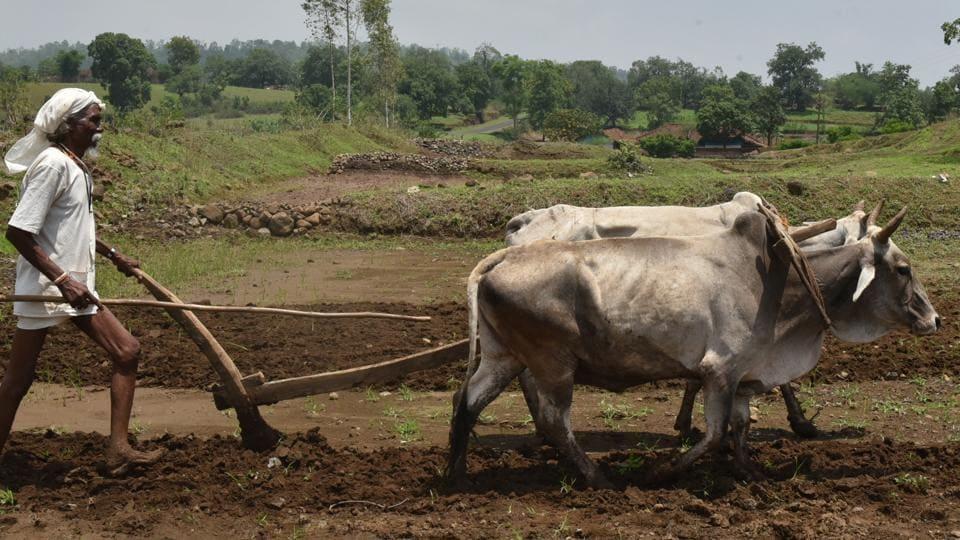 West Singhbhum,West Singhbhum farmers,Jharkhand