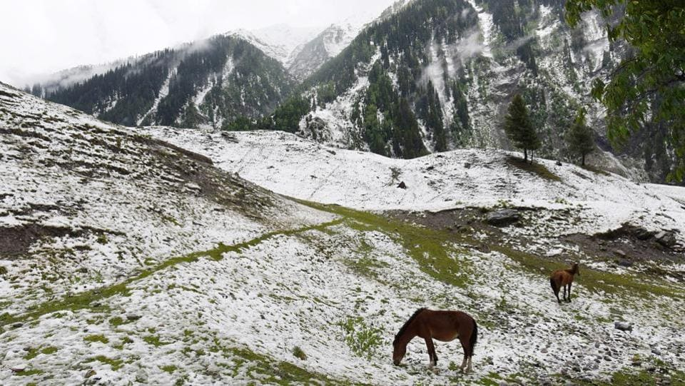 A pair of horses graze on a snow covered meadow after fresh snowfall st Sonamarg, about 89 km from Srinagar, Jammu and Kashmir. (Waseem Andrabi / HT Photo)