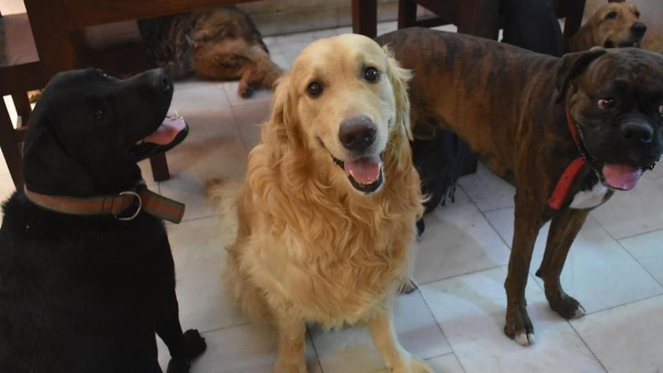 Dogs seen at a home stay for dogs, at Palam Vihar, Sector 23, in Gurugram.