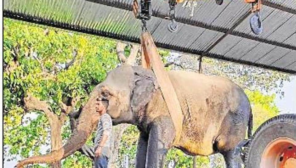 Panel to be formed to discuss mercy killing of ailing elephant at Corbett Reserve